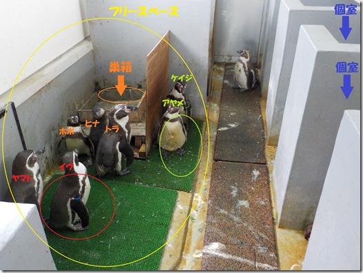 ペンギン小屋事情