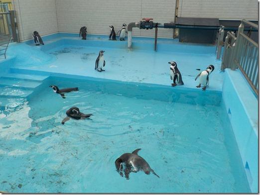閉館直後のペンギンプール